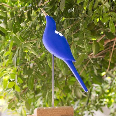 Passaro-Azul-Site