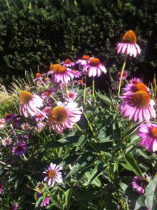 Flores Imaginárias