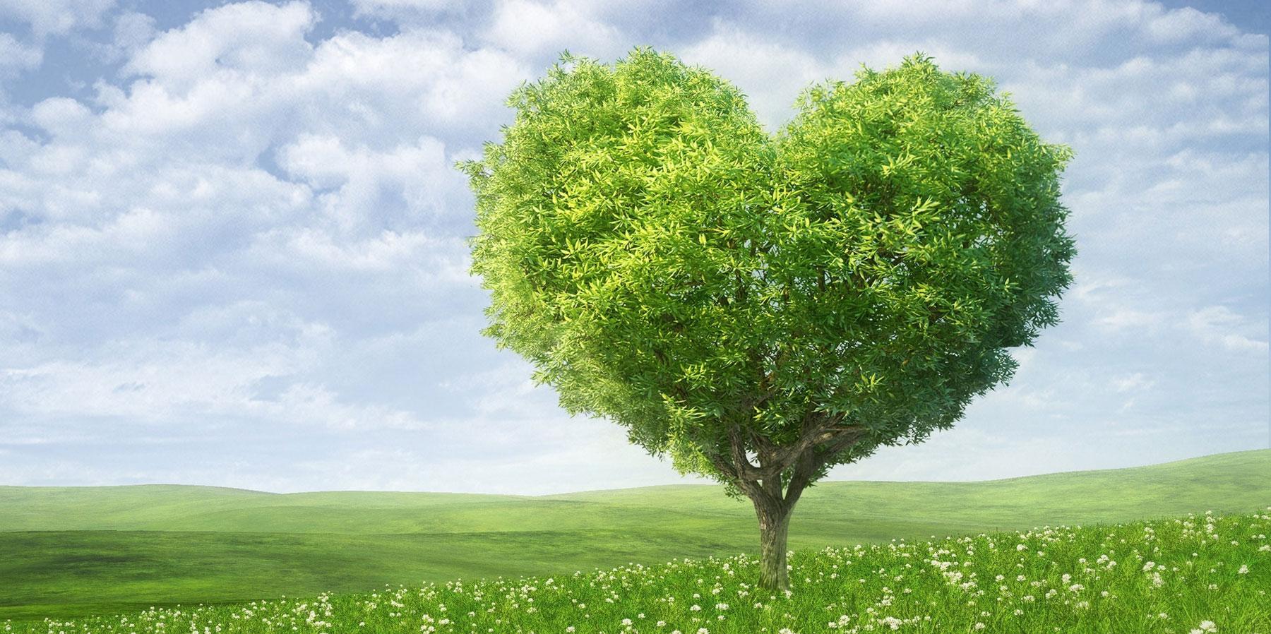 Manifesto PdD: Por mais árvores, sorrisos e amor!
